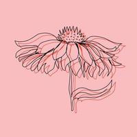 ramo de botões de flores com folhas isoladas de fundo vector