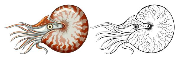 Contorno animal para concha de nautilus vetor