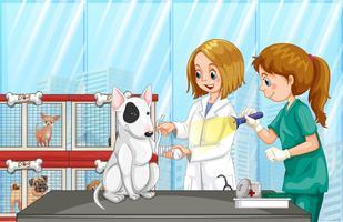 Veterinário ajudando um cão na clínica vetor