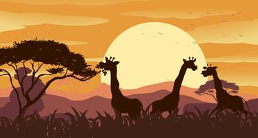 Cena fundo, com, girafa, em, savanna, campo vetor
