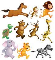 Diferentes tipos de corrida de animais vetor