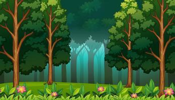 Floresta escura com grandes árvores paisagem vetor