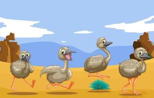 Pequenos avestruzes correndo no deserto vetor