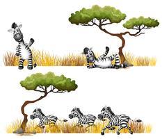 Zebras descansando no campo vetor