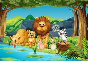 Animais selvagens que vivem no rio vetor