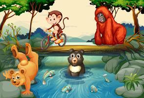 Animais pelo rio vetor
