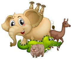 Diferentes tipos de animais selvagens