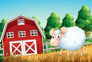 Um, ovelha, em, terra cultivada vetor