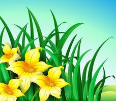Um jardim na colina com flores amarelas vetor