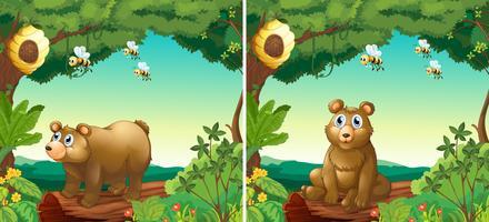 Cenas com ursos e abelhas vetor