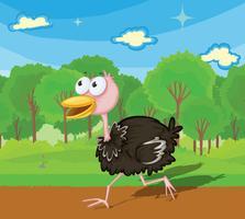 Avestruz correndo vetor