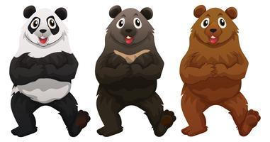 Três tipos de ursos vetor