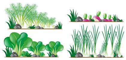 Quatro tipos de vegetais no jardim vetor