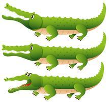Crocodilo em três ações diferentes vetor