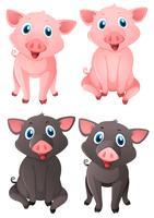 Porcos cor-de-rosa e pretos vetor