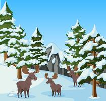 Três mooses na montanha de neve