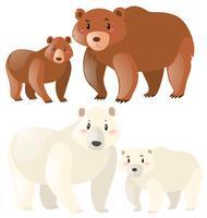 Ursos pardos e polares vetor
