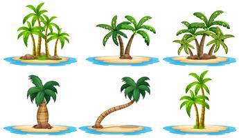 Ilhas e palmeira vetor