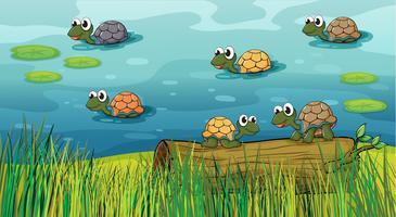 Um, grupo, de, tartarugas, em, a, rio vetor