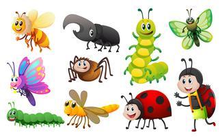 Diferentes tipos de insetos vetor
