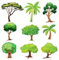 Várias árvores vetor