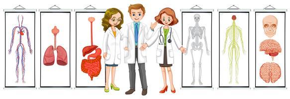 Três médicos e diferentes diagramas do sistema humano vetor