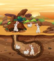 Coelhos, cavando, um, buraco vetor