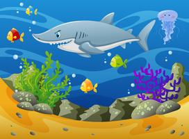 Tubarão e outros animais marinhos debaixo d'água vetor