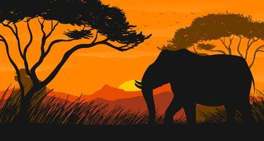 Cena de silhueta com elefante no campo