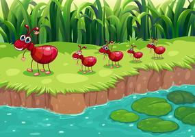 Uma colônia de formigas vermelhas na beira do rio vetor