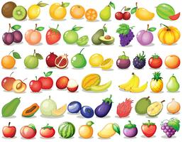 Conjunto de frutas vetor
