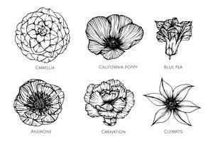 Conjunto de coleta de ilustração de desenho de flor. vetor