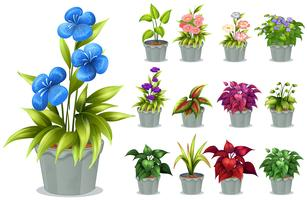 Flores na panela de barro vetor