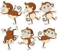 Conjunto de macaco vetor