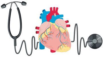 Estetoscópio e coração humano vetor