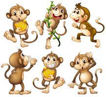 Macacos selvagens brincalhões vetor