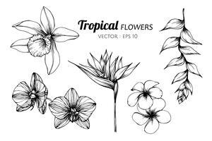 Conjunto de coleta de ilustração de desenho de flor tropical.
