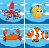 Tipo diferente de animais marinhos vetor