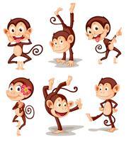 Série do macaco vetor