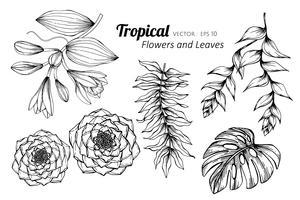 Grupo da coleção de flor tropical e de folhas que tiram a ilustração. vetor
