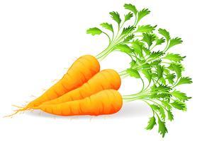 Cenouras Nutritivas vetor