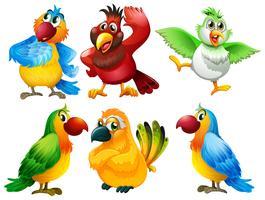 Aves vetor