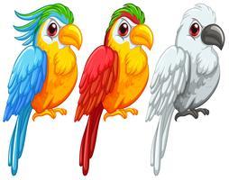Papagaios vetor
