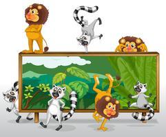 Leão e esquilos com placa vetor