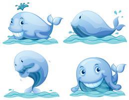 Baleias azuis vetor