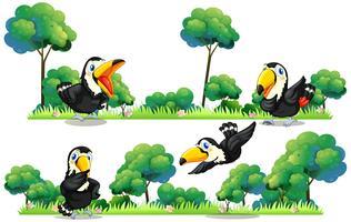 Tucanos voando no jardim vetor