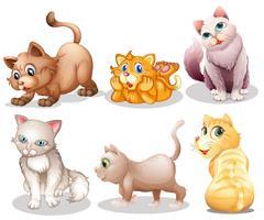 Gatos brincalhões vetor