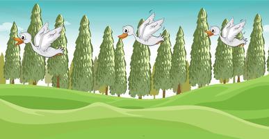 Três pequenos cisnes