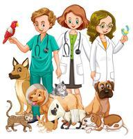 Veterinários e muitos tipos de animais vetor
