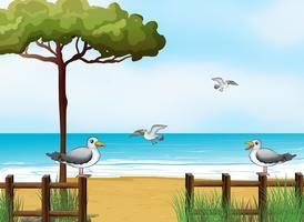 Aves à procura de alimentos na praia vetor